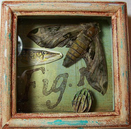 Mothra-A tiny shadow box with various items added including a very large moth th…