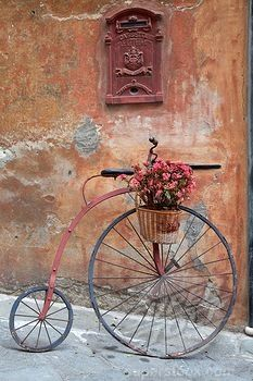 SuperStock - Historic bicycle with a flower pot, Savona, Riviera, Liguria, Italy, Europe