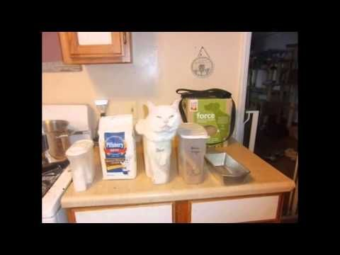 Funny & Crazy cats 2015