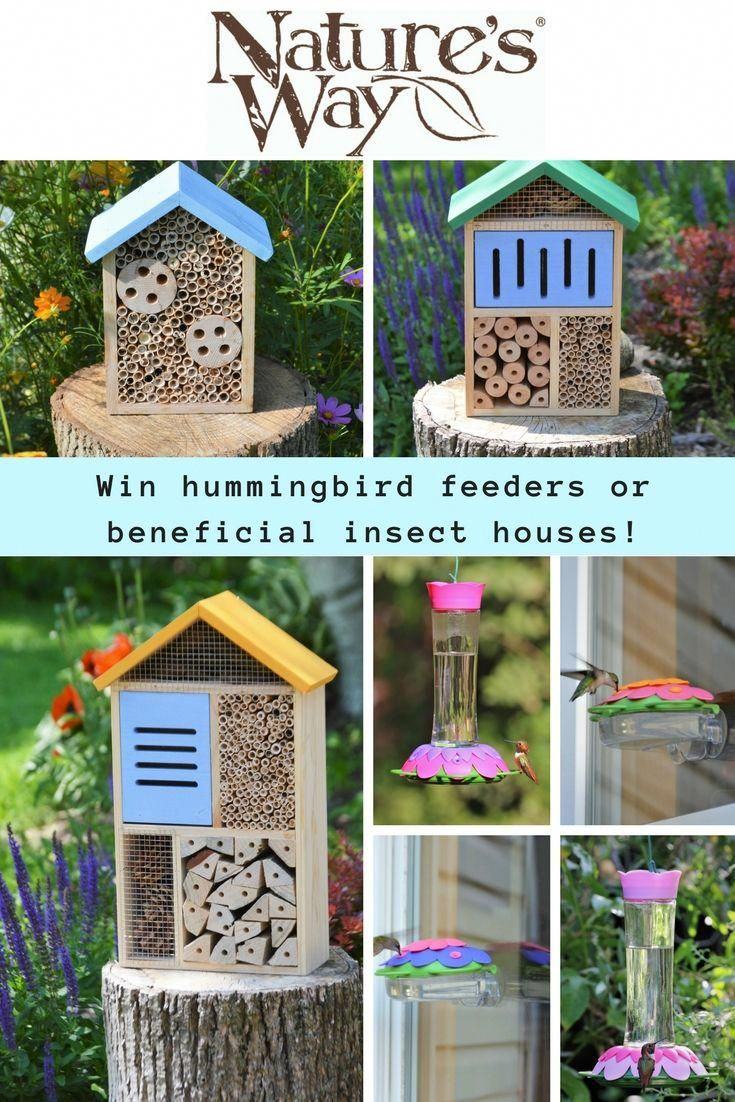 Enter to win one of two prize packages from Nature's Way Bird Products!  Winner #1 will win four So Real Nectar Feeders. These feeders showcase a  unique ... - Enter To Win One Of Two Prize Packages From Nature's Way Bird