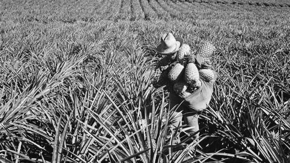 In the late 1800s, sugar and later, pineapple plantations powered Hawaii's economy. James Dole turned Lanai into the world�s leading exporter of pineapple, earning it the nickname �Pineapple Island.�