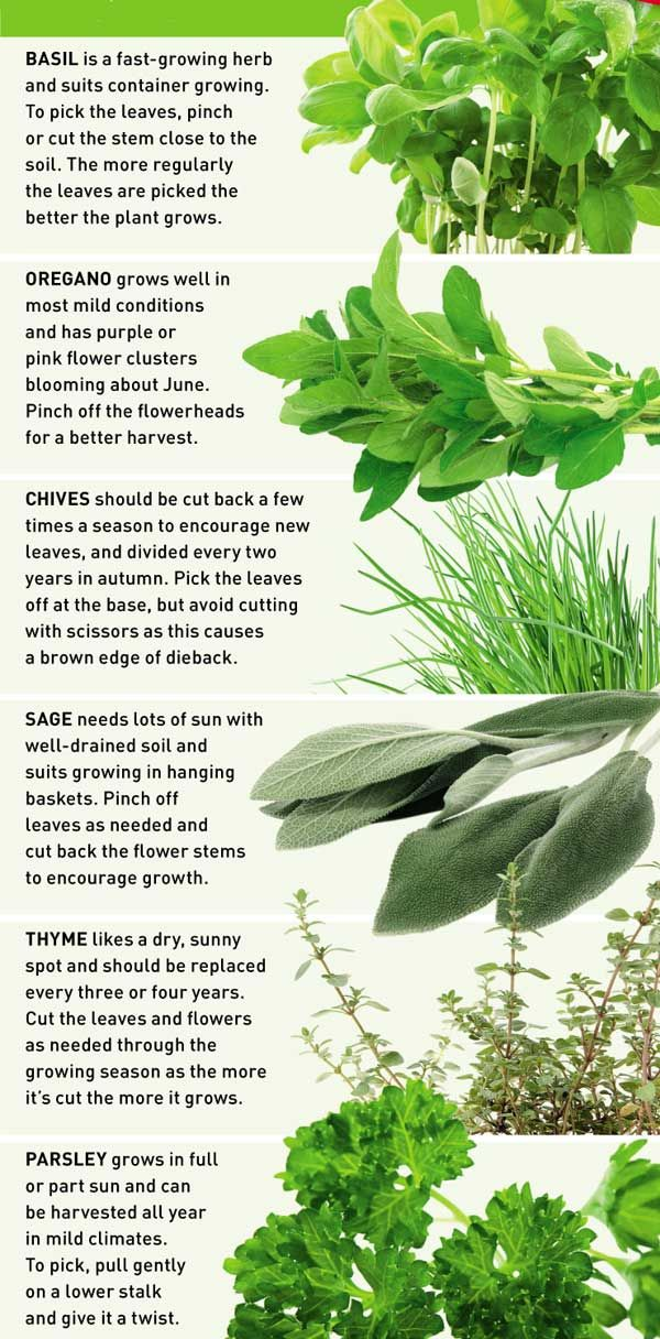 How to grow herbs in baskets | Reader's Digest New Zealand