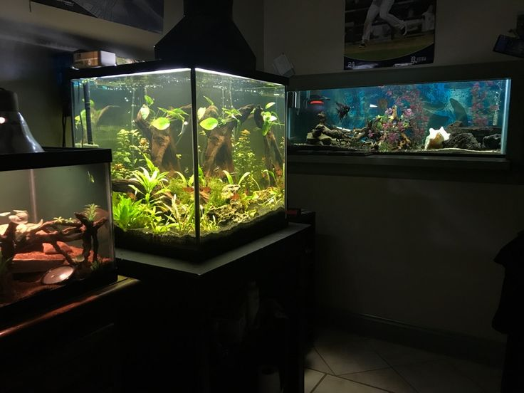My two aquariums and terrarium. 35G cube planted 90G community and a 20L for my ball python