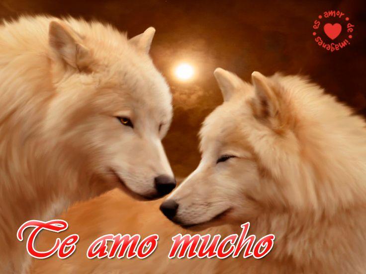 17 mejores ideas sobre Imagenes De Lobos Enamorados en Pinterest ...