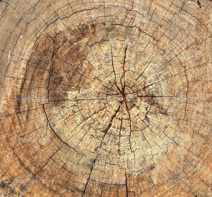 Старый пень текстура дерева - Стоковое изображение: 31213455