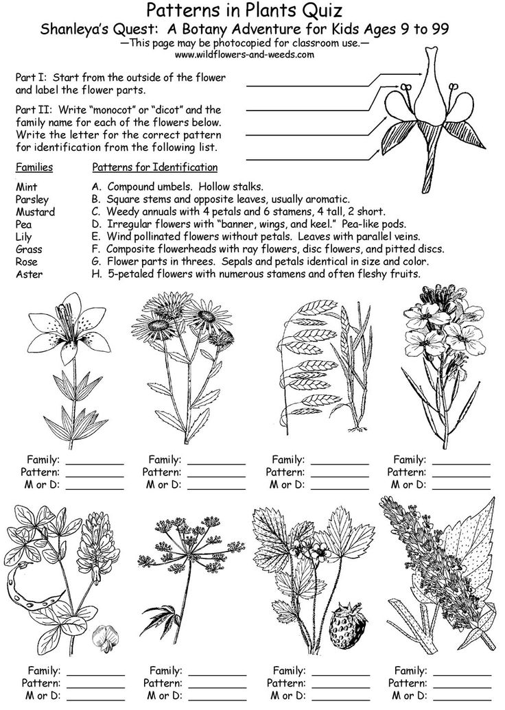 Plant Database: 33 Best Outdoor Science Activities Images On Pinterest