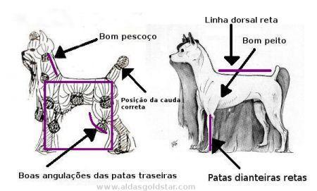 Interpretação do Estalão da Raça - Yorkshire Terrier Portugal :: Alda's GoldStar