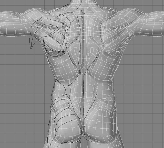 human back topology