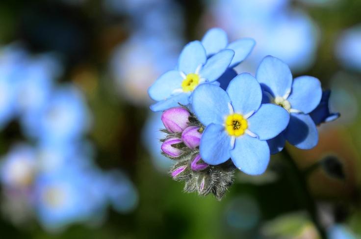 flor azul =)