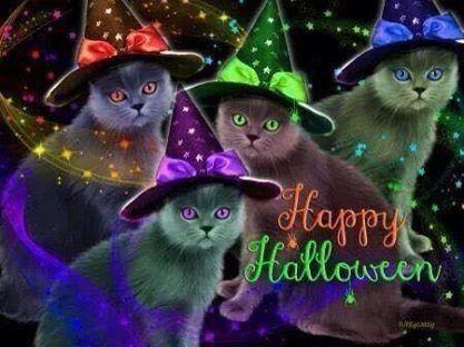 Happy Halloween halloween halloween quotes halloween quote happy halloweeen halloween cats