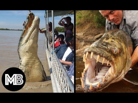 20 Giant Animals You Won't Believe Exist