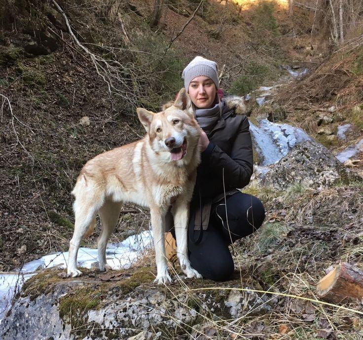 Gita sui monti sopra Belluno... Into The Wild 🐺🌲🍂🌿🍃❄️ #Saarloos #intothewild #WeAreFossombrone #FOSteam