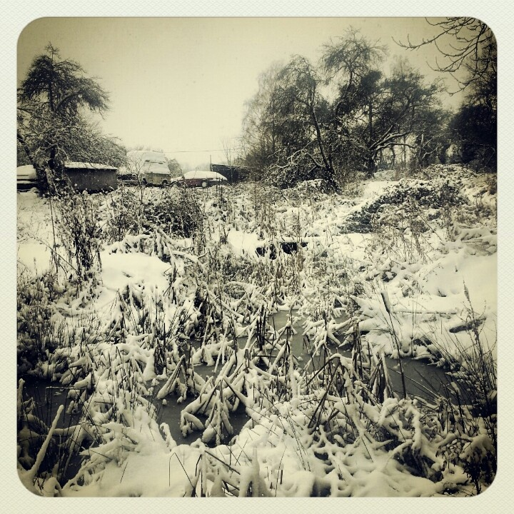 Snowy pond.