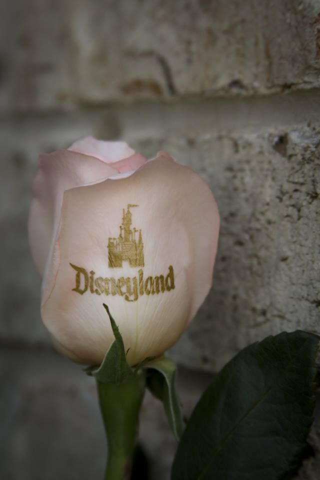 Disneyland Gardens and the custom Disney logo rose.  When you have gardens as big as Disney, they'll make you up a custom rose too!