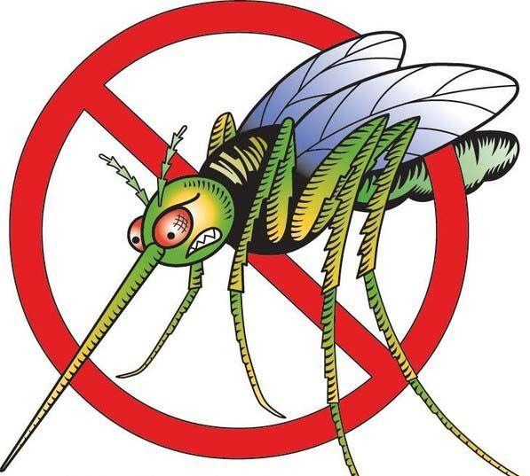Pin On Stop Zika In Backyard Ponds