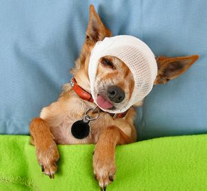9 Home Remedies for Eye Infection in Dogs