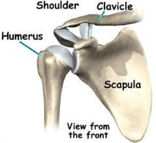 What Is a Proximal Humerus Fracture?: The proximal humerus is the ball of the ball-and-socket shoulder joint.