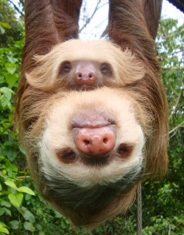 Mommy and baby Sloths(: