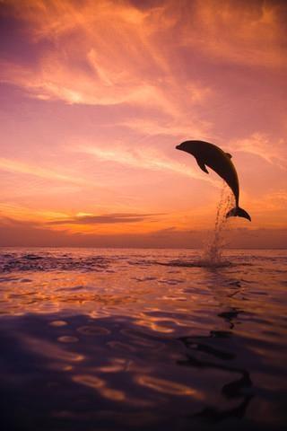 dolphin tale essay