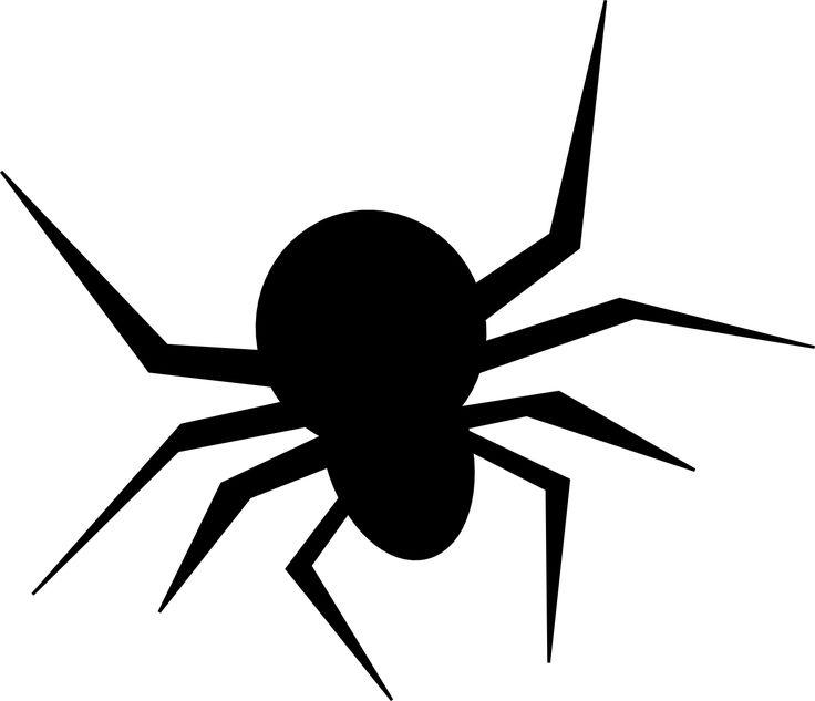 Spider on Pinterest