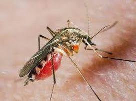 бальзам звёздочка, как бороться с комарами, народное средство от комаров, средства защиты от комаров, средство +от укусов комаров, средство ...