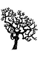 Tree Species Compendium --Garry oak