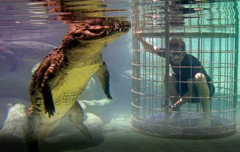 Are you brave enough? crocodile cage diving