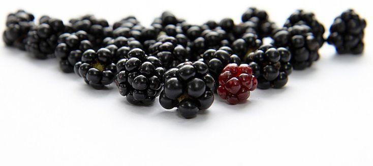 Le more! Buonissime e bellissime. Come sempre partiamo dalla natura. Blackberries! Super good and beautiful. As usual we can begin from Nature. Nere e luci