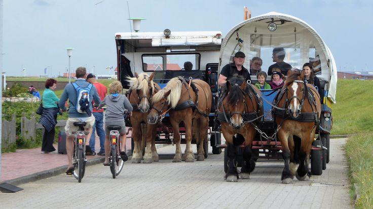 Pferdekutschen auf der Insel Juist #juist