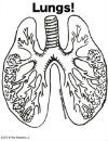 Human Body Printables to Color! Free Downloadable .pdf from Pow!Science!