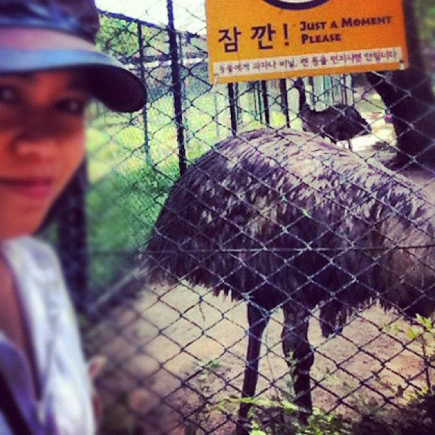shy emu ^^