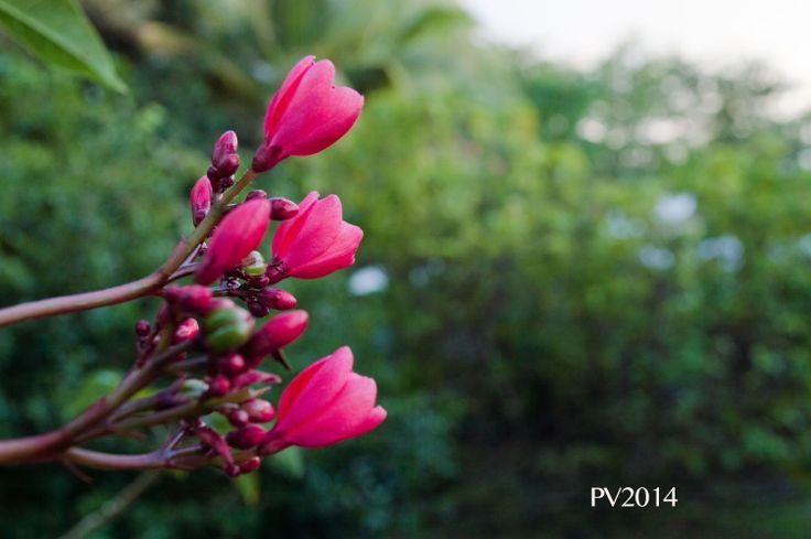 DOMINICA ISLAND - where flowers blossom