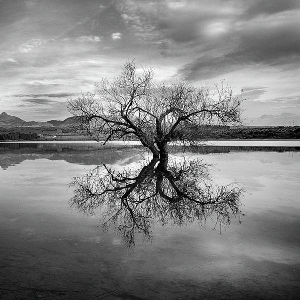 Magic Tree Sunset At The Lake Black And White Landscape Black And White Tree Black And White Photography