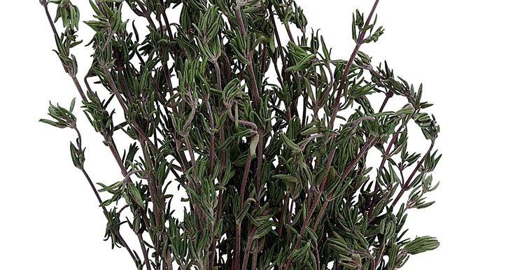 Mi planta de romero se está tornando marrón y muriendo