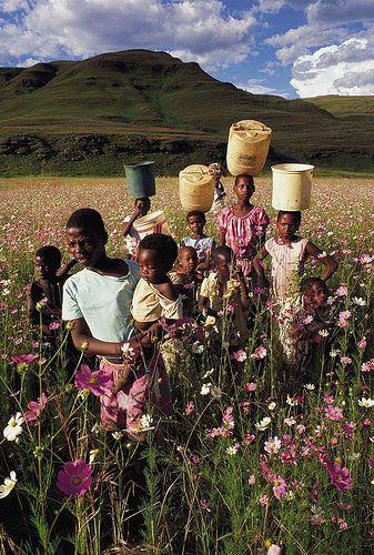 Children walk amongst the cosmos, KwaZulu-Natal Midlands, South Africa