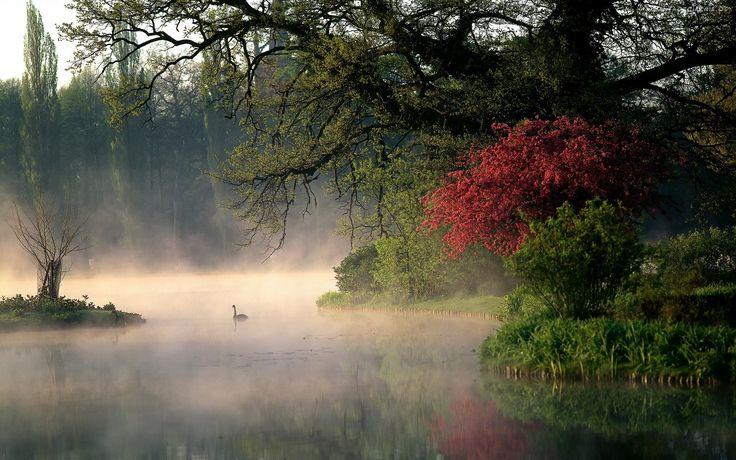 Jezioro, Mgła, Las