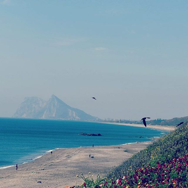 Swallows playing above the beach with a stunning view of the beach leading to the Rock of Gibraltar.