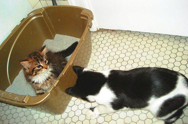 Os gatos têm todo um ritual importante para ir ao banheiro: eles cheiram a areia, sobem na caixa devagar, escolhem um lugar, cavam, cavam, cavam mais um pouco, escolhem uma posição, fazem as necess…