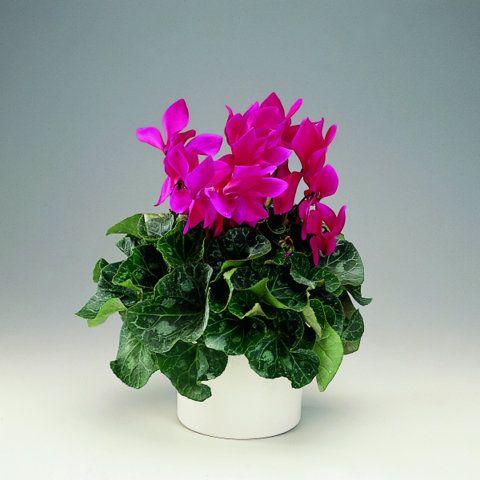 BLOG FLORYSTYCZNY: Najpiękniejsze rośliny kwitnące na DZIEŃ BABCI