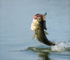 Methods for Bass Fishing With CrankBaits - http://bassfishingmaniacs.com/methods-bass-fishing-crankbaits/