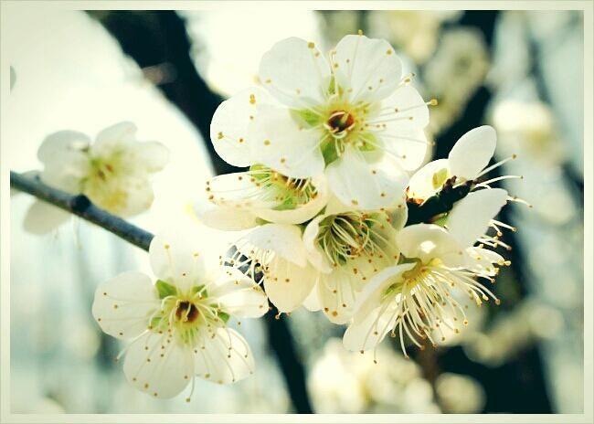 매화꽃 필적에 찍어두었던 사진 이예요. 화사한 봄날에 잘 어울리지 않나요?