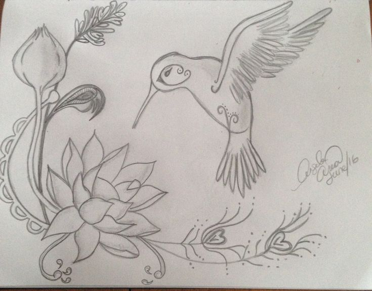 Lotus flower with hummingbird pencil drawing