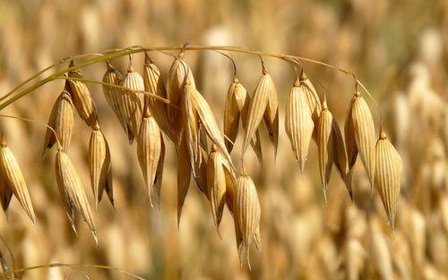 Che cosa mangiavano i Romani a colazione quando marciavano per espandere i confini dell'Impero? E qual è quel cereale tanto resistente e versatile quanto delicato che si presta ad un sacco di ricette buonissime, anche solo con due ingredienti?