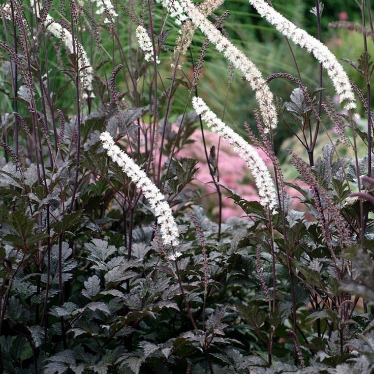 Shade Garden Ideas Perennials Shrubs