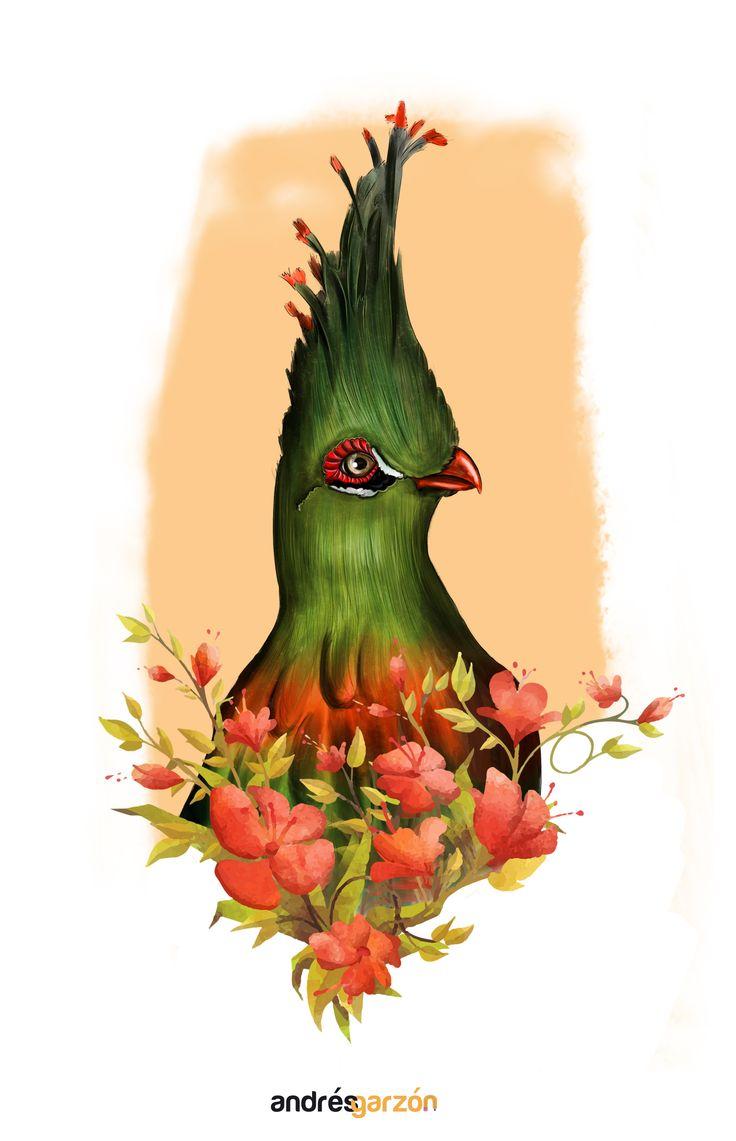 BIRD ILUSTRADO