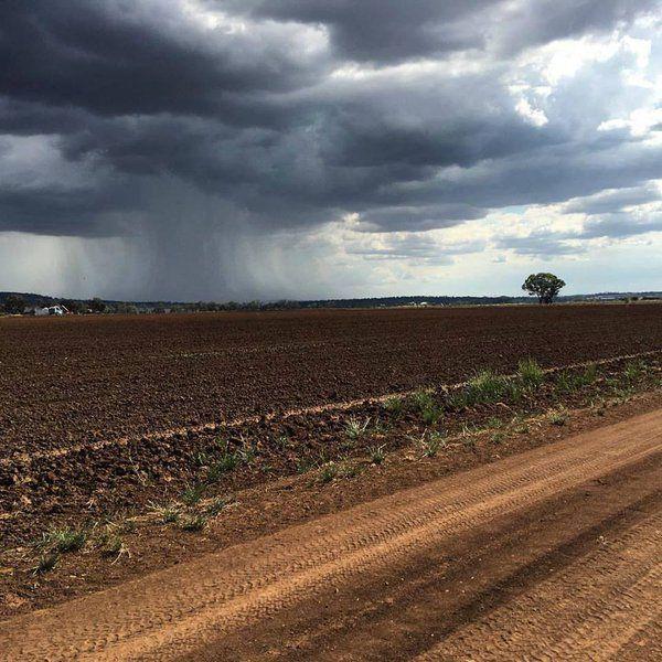 .@AustralisTerry  Rain falling on the 'ridge' of Shenhua mine site Replenishing our groundwater @StopShenhua #auspol #agchatoz #NSWpol