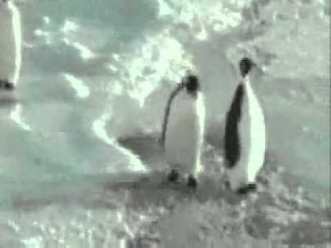 Funny Clips - Episode 2 - Penguin slaps other penguin