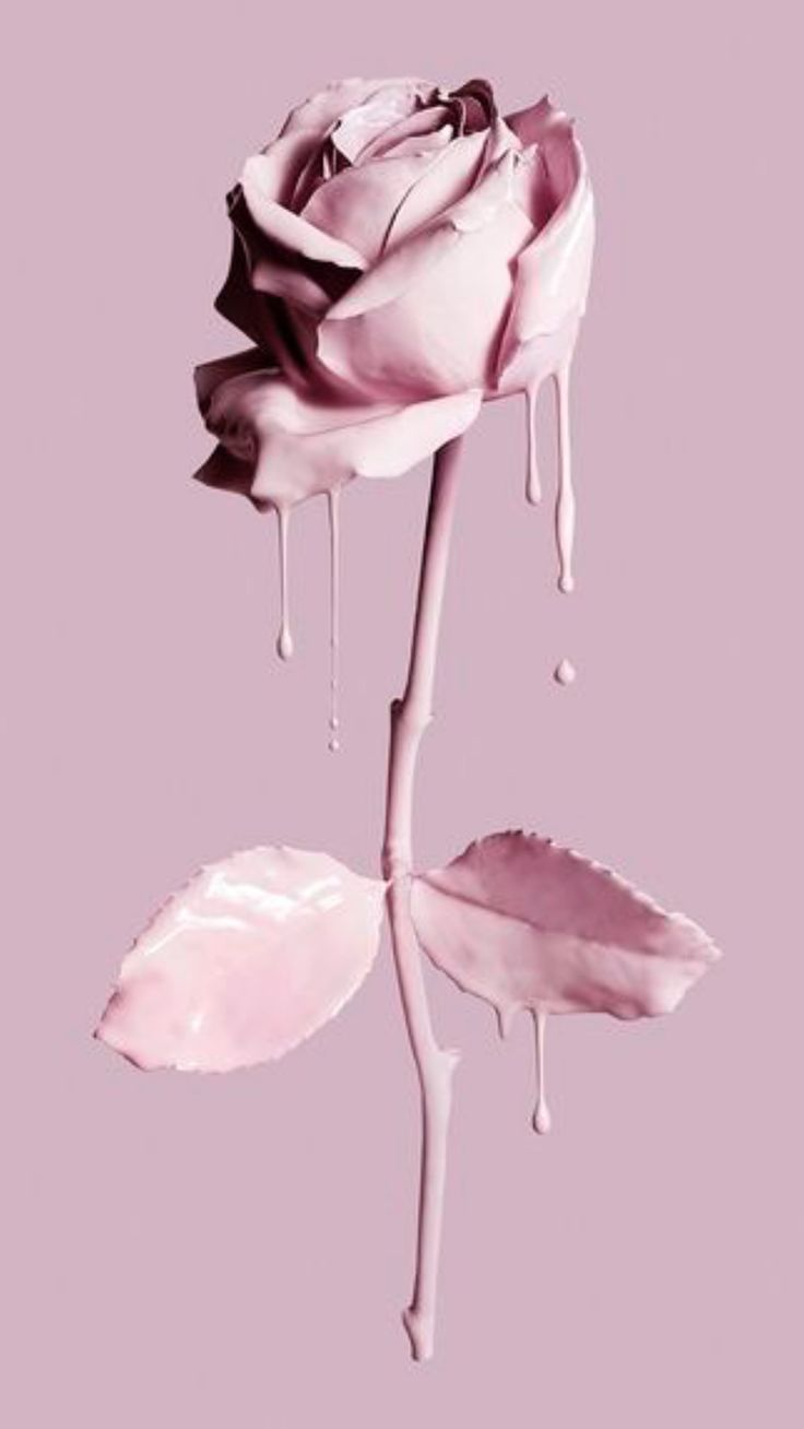 Painting the rose pink
