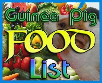 Here is the ultimate guinea pig food list. See which foods are safe for guinea pigs and which are not.
