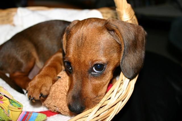 #puppy #dotson